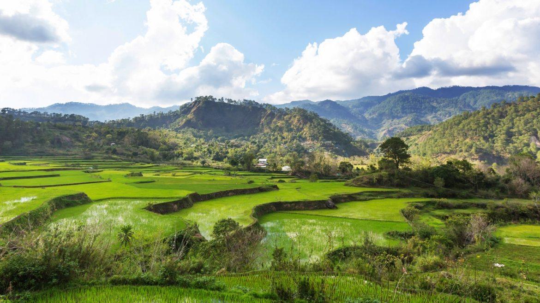 Riža je najstarija poljoprivredna kultura na svijetu
